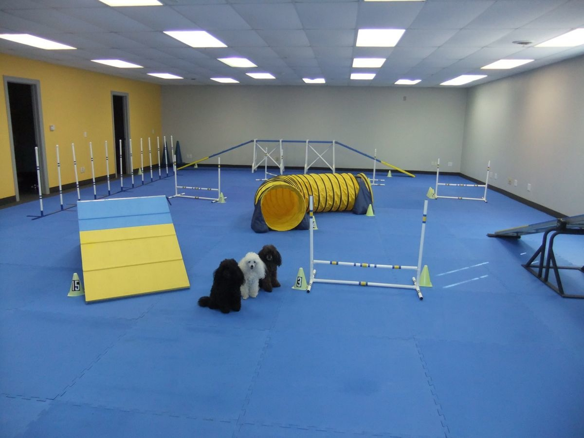 indoor dog training center in Owatonna Minnesota